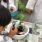 植物の観察